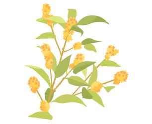 素材】かわいい花のイラスト ... : 便箋 イラスト : イラスト